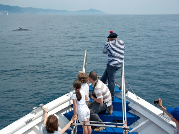 Whale watching departing from the Porto Antico area
